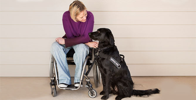 Woman in wheelchair playing with dog.